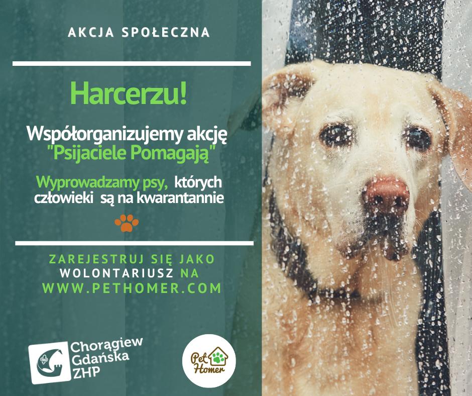 Harcerska służba – pomóż psim właścicielom, którzy przebywają na kwarantannie